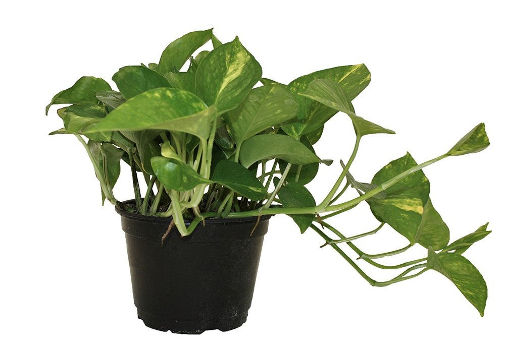 Top-5-Easy-to-Care-for-House-Plants-3