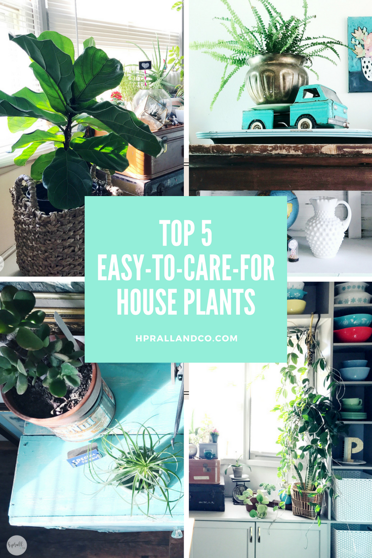 Top-5-Easy-to-Care-for-House-Plants-1