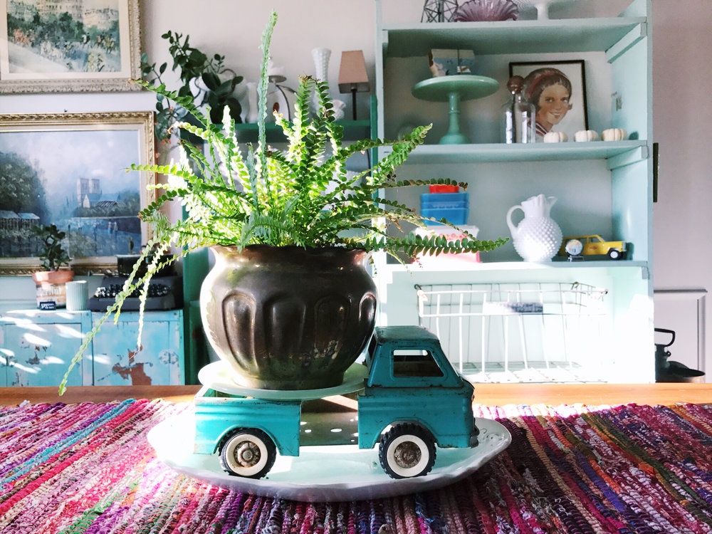 5 Watering Tips for Happy House Plants from H.Prall & Co. | hprallandco.com