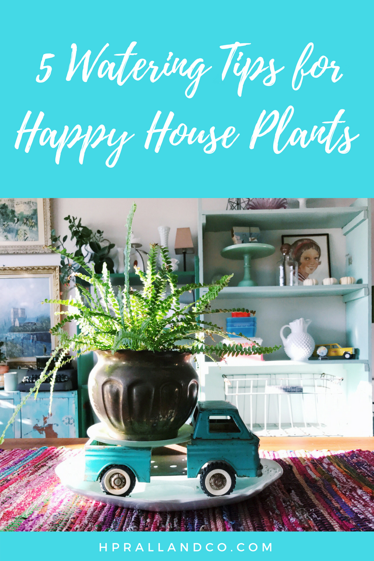 5 Watering Tips for Happy House Plants by hprallandco.com