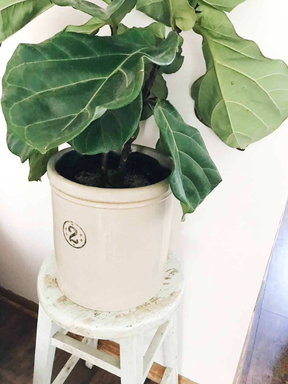 Give Your Houseplants a Makeover from hprallandco.com | H.Prall & Co.