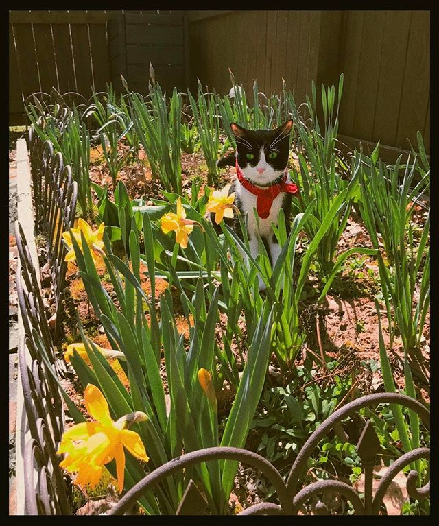 #arwentheboycat enjoying the flowers