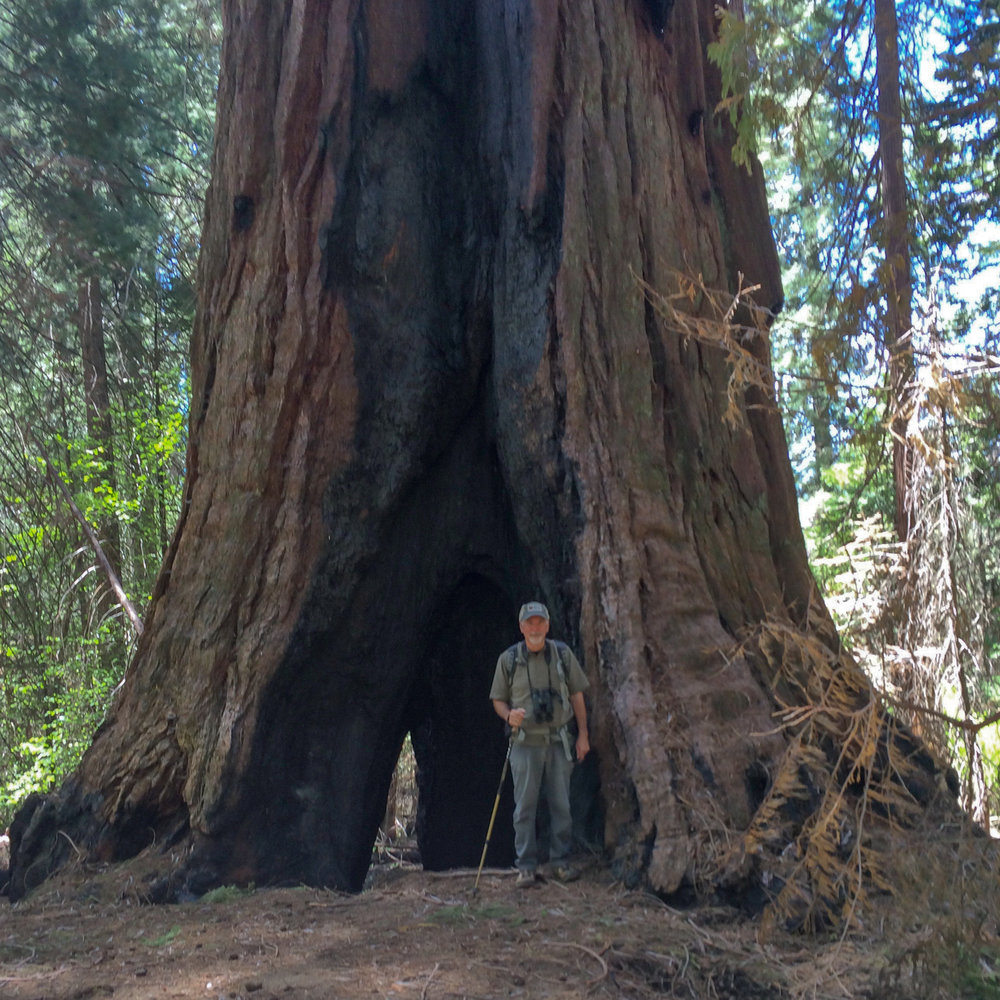Keith at the base of a giant sequoia tree.