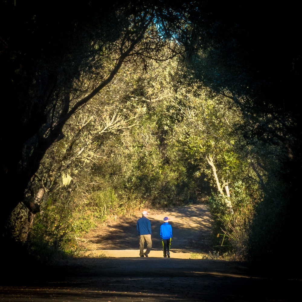The trail through the arroyo willow and oaks.