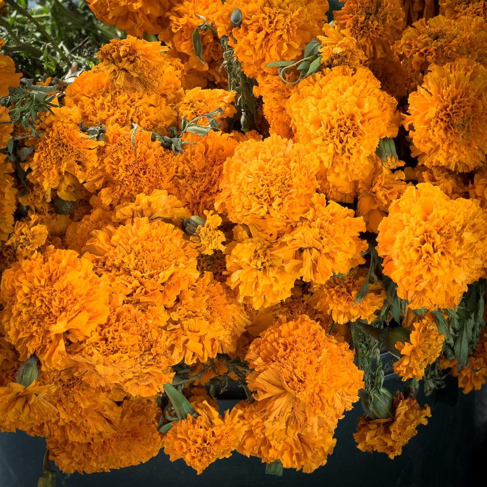 Marigolds are an important part of the altar and the ceremony.