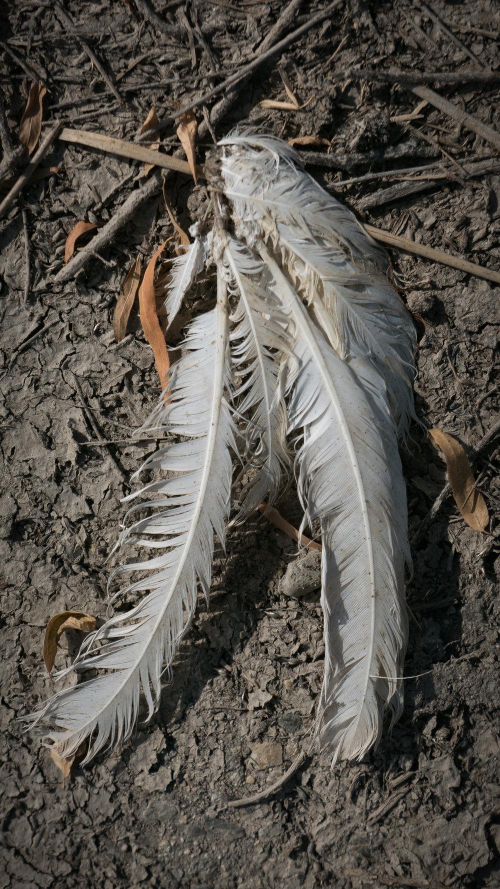 Dead bird remains.