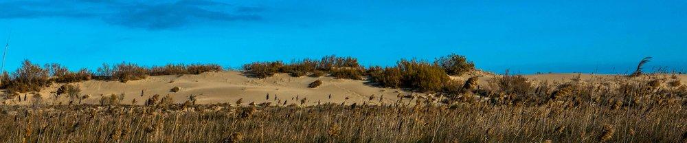 Windswept coastal dunes of the Mediterranean Sea.