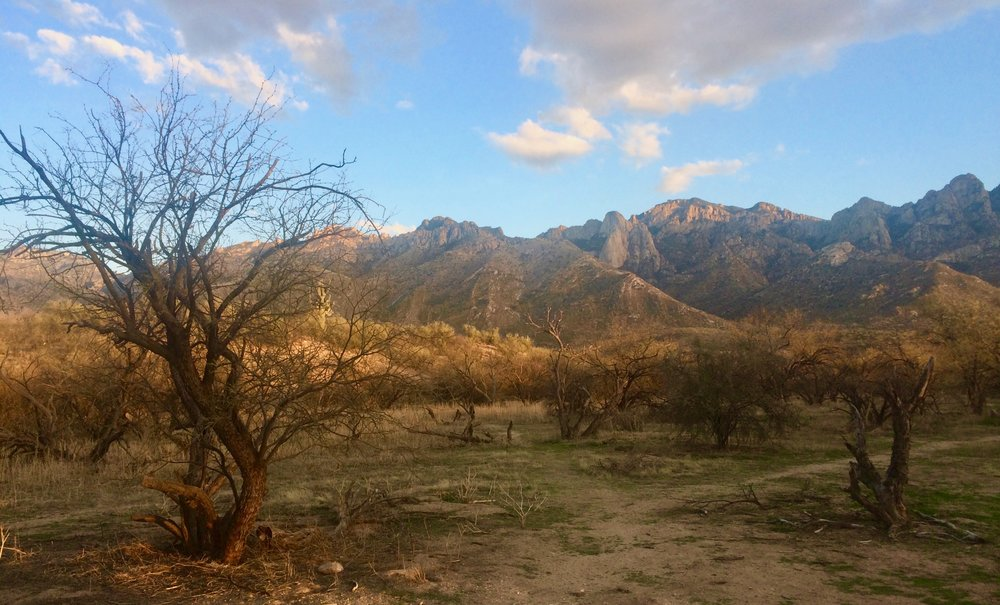 The view in our campsite in Catalina State Park.
