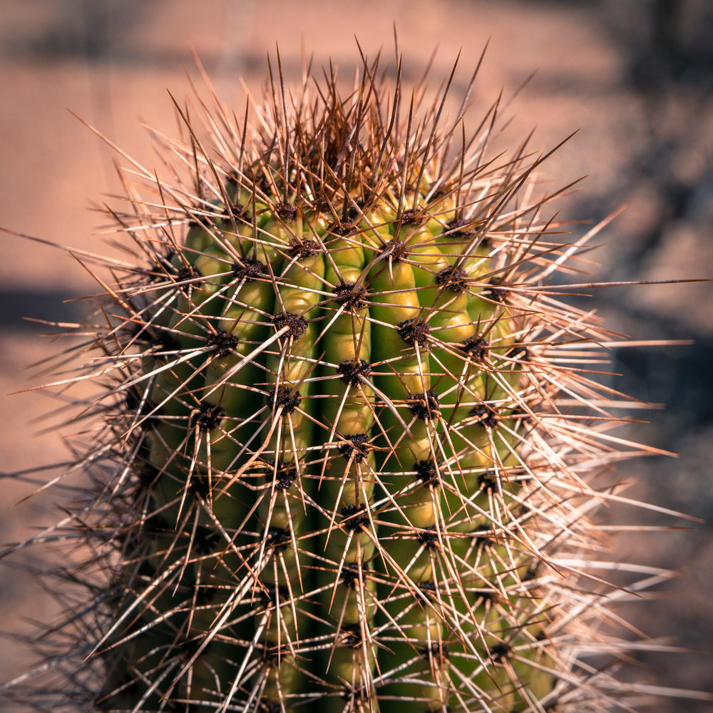 Organ Pipe Cactus, up close and personal.