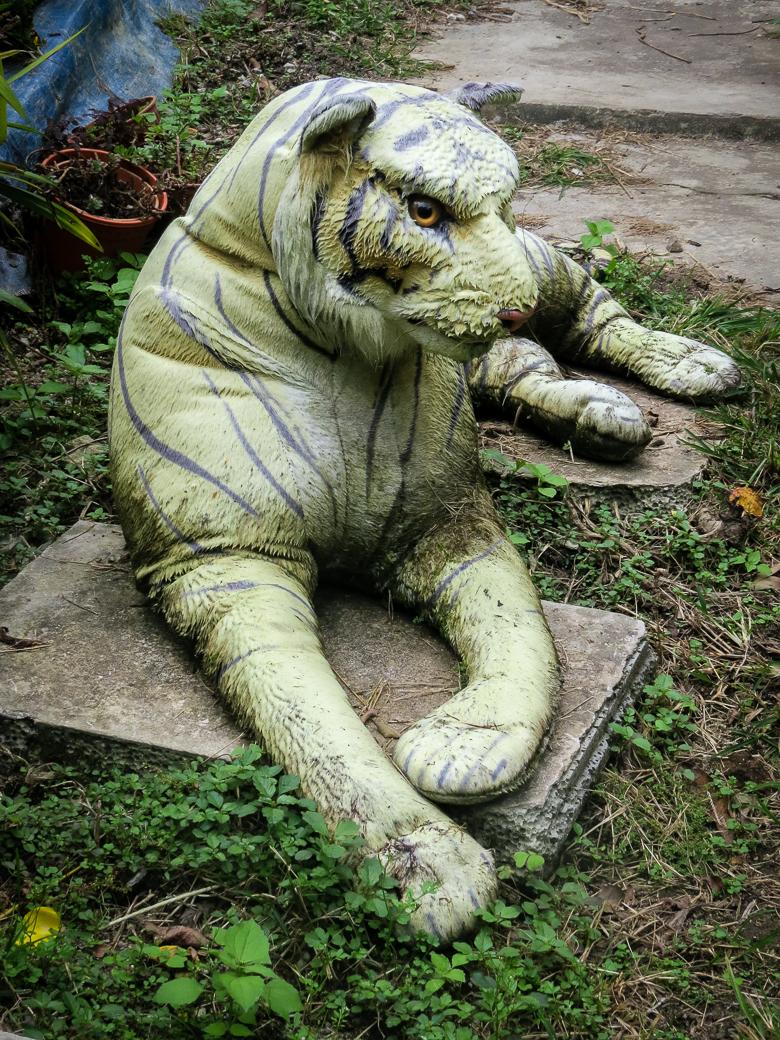 Garden Ghost Tiger?