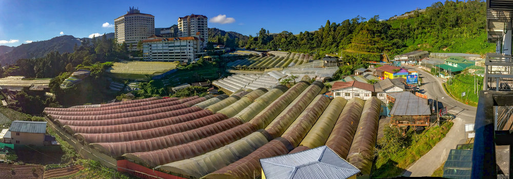From our room, we had a view overlooking the famous Cameron Highlands' strawberry farms.