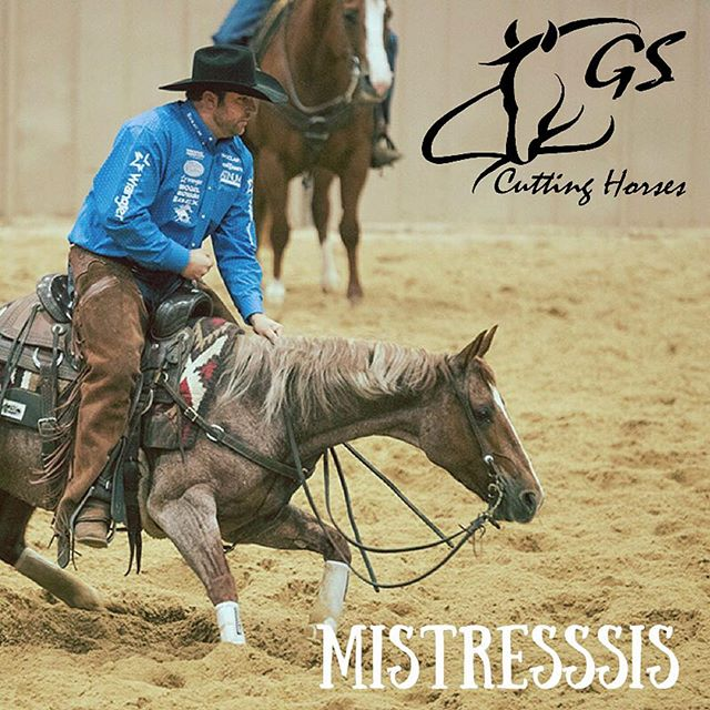 "Congratulations to Holy Cow Performance Horses Texas and Mistresssis!! Grant and ""Sister"" had a composite score of 440 to advance to the Open Finals at the Breeders Invitational!!! Finals will be held on Saturday! Best of luck to everyone!! #holycowperformancehorses #teamgs #gscuttinghorses #breedersinvitational2017 @kenzington.xo @holycowperformancehorses"