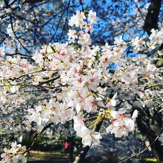 Be Bold. Be Beautiful.☀️🌿 #runasone4m #spring #run #backinit #outofhibernation