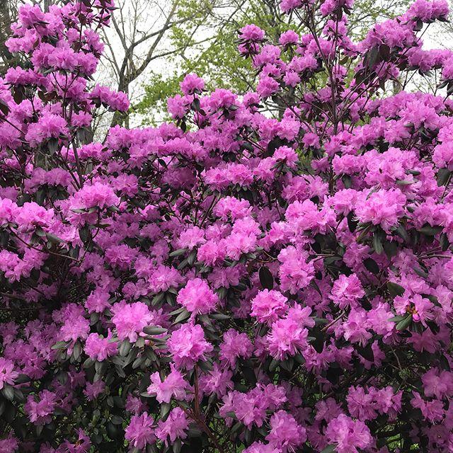 Nature's Art Fair - Spring 2018. Sensory overload redux. ☀️🌿#springfridays #flowergame #art #artfair #friezeweek #countrylife #upstateny #finally #nowinter