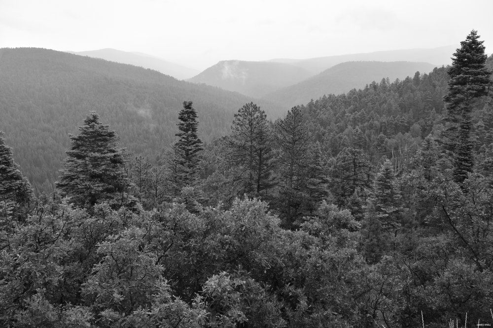 Mountain Forest Black and White