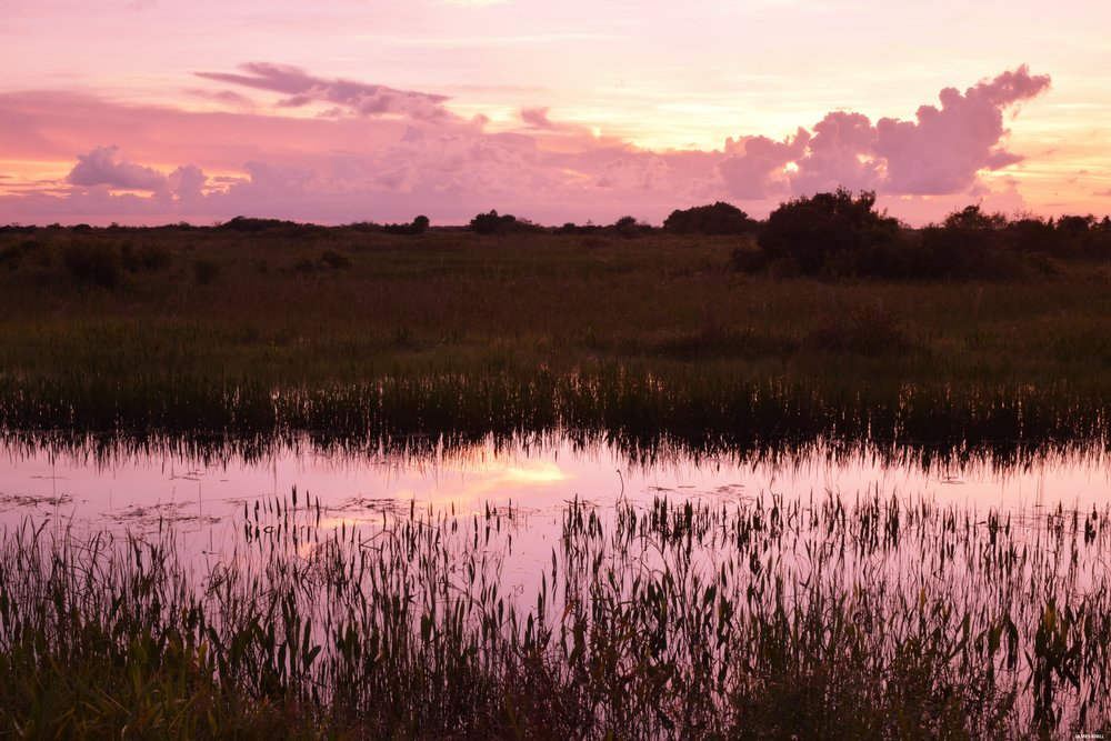 Marshlands in Pink