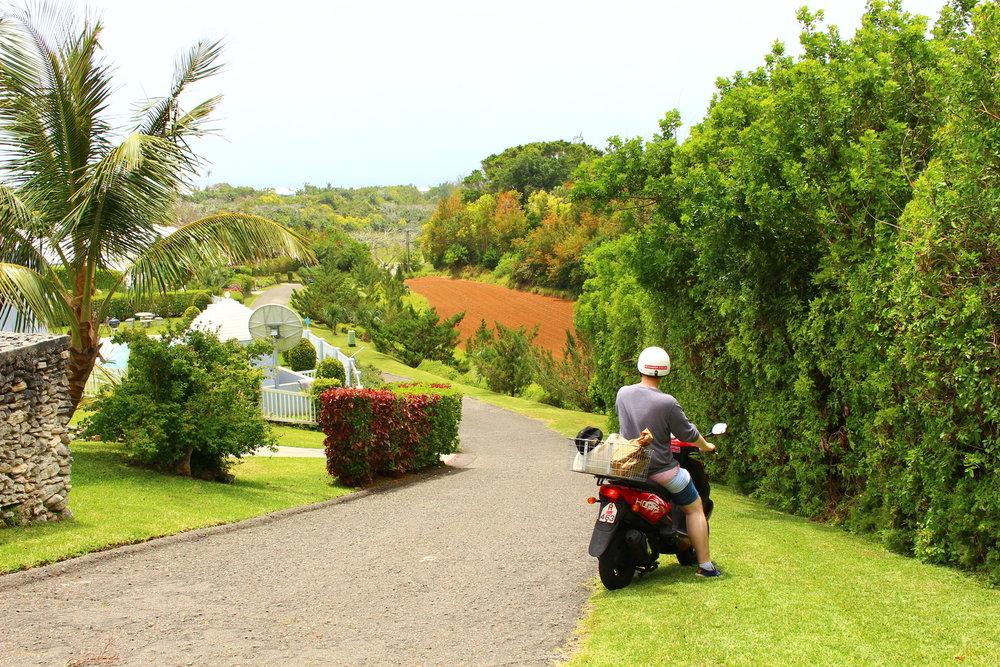 The Culture Trip: Best of Bermuda