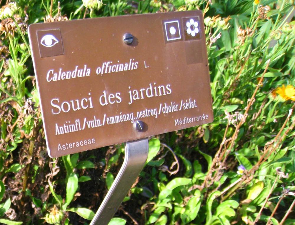 Geneva Botanical Garden_3.png