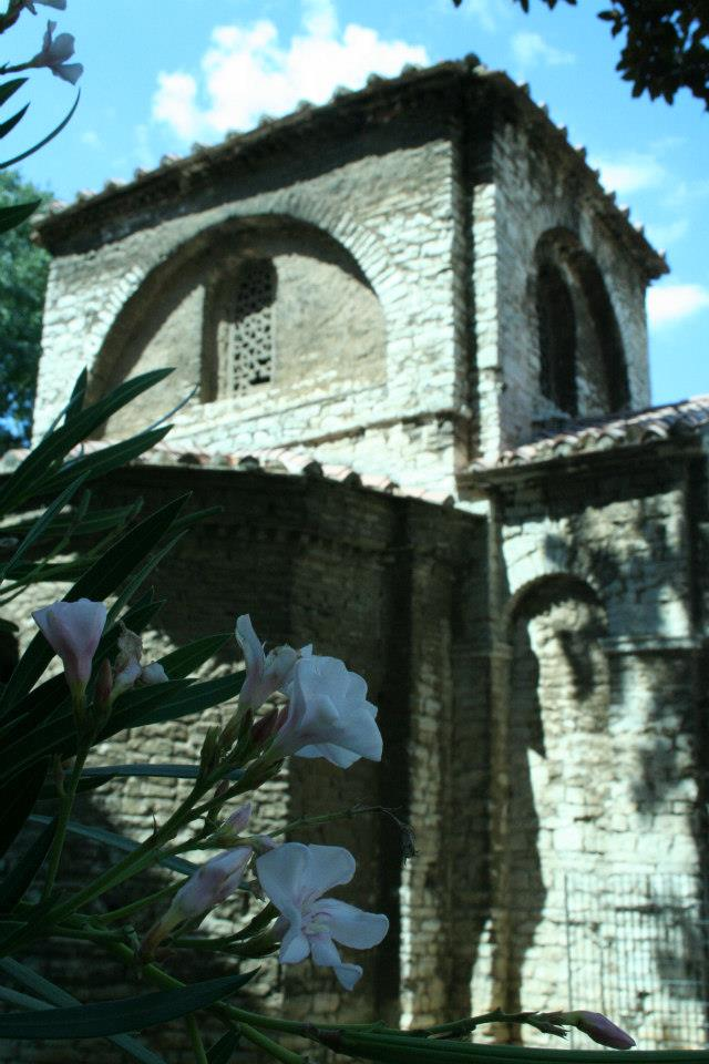 Oleander in Croatia.jpg