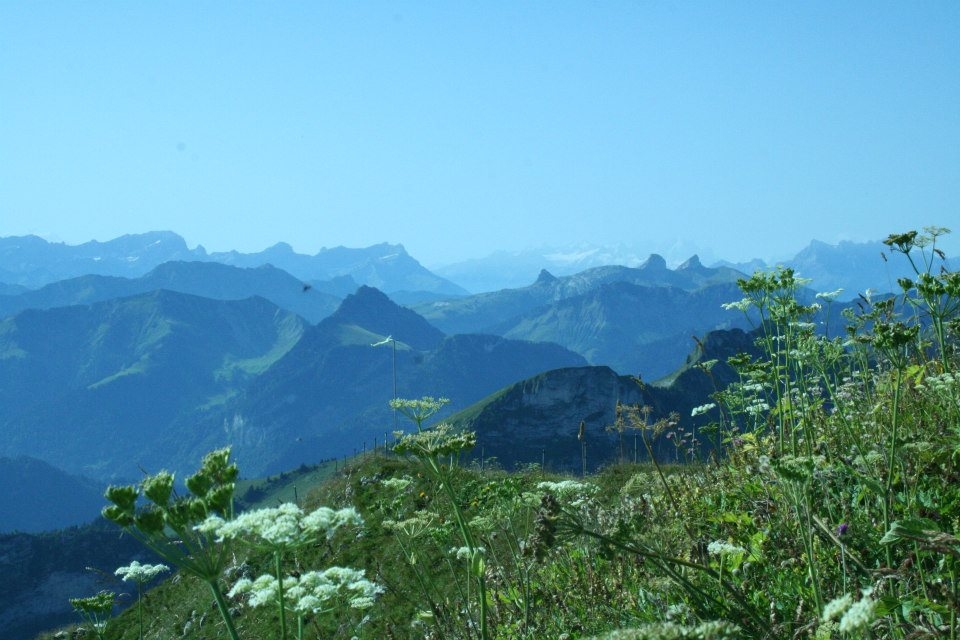 Swiss Alps.jpg