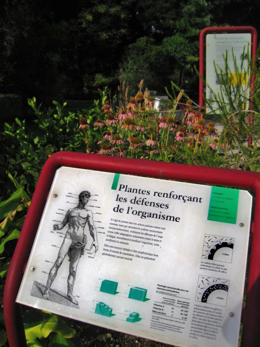 Geneva Botanical Garden_6.png