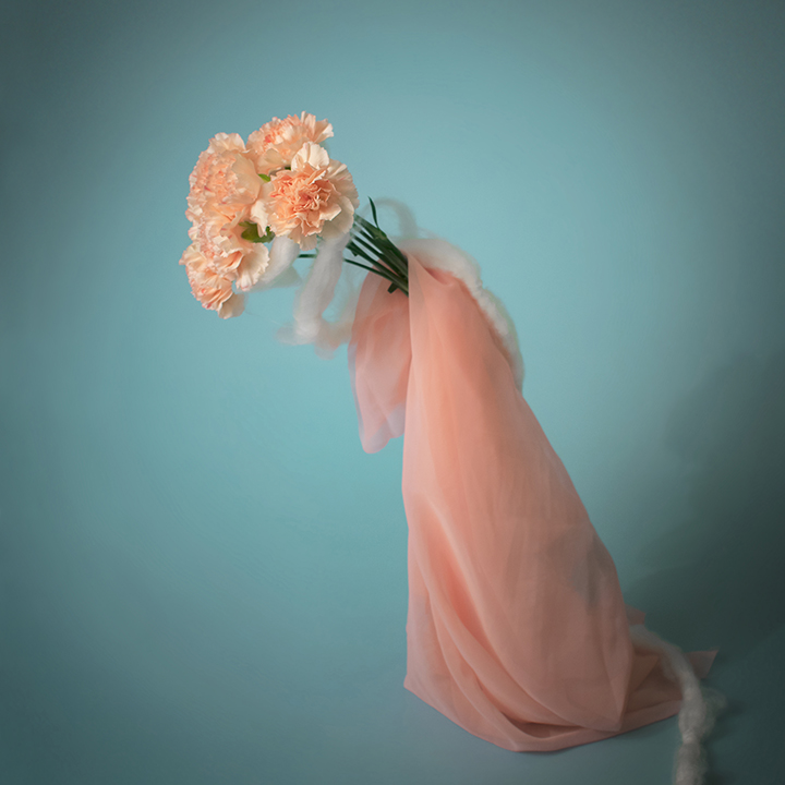 series_Carnations_Posing_title_Untitled_12x12.jpg