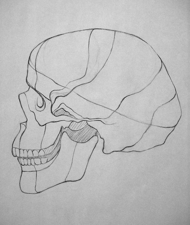 08d_4:30:10_skull3.jpg