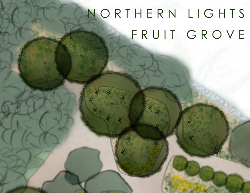 northern-lights-fruit-grove.jpg