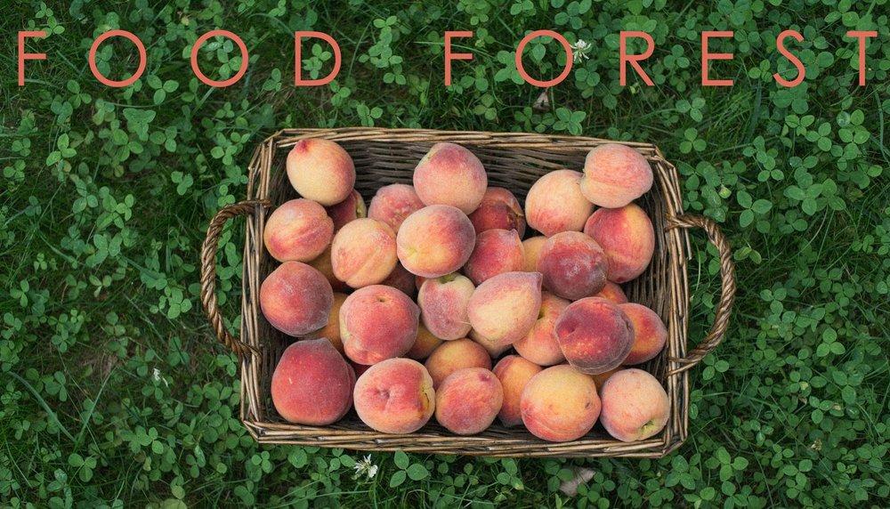 food_forest_titleV2.jpg