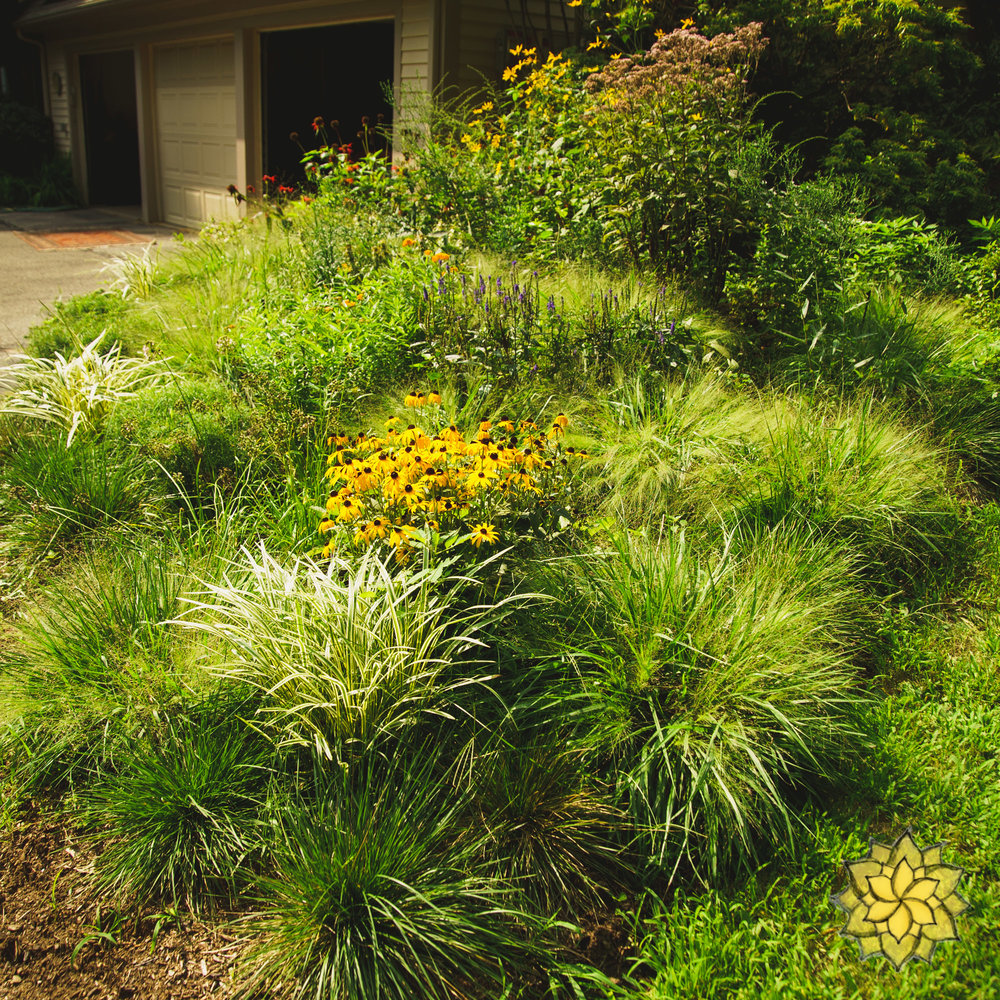 Suburban Pollinator Meadows - We design, install, and care for beautiful pollinator gardens that fit the size and scale of suburbia. They add beauty to the landscape while supporting birds, bees, butterflies and beneficial invertebrates.