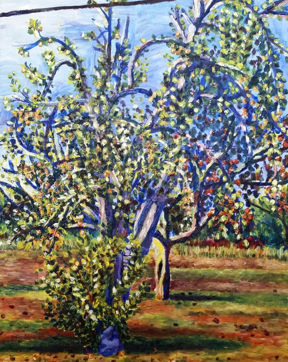 Pear Tree, private collection