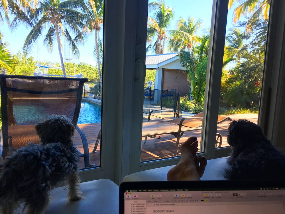 This year we bought our dream home, and traded our beach for an island! This is my new writing view.