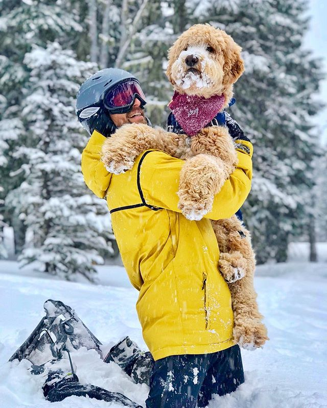 Love'n on our pup, that's what! 🐶❤️ Six hours from the desert 🐪 and it's a winter wonderland. Spring in OR still got that ❄️❄️❄️!!! •••••••••••••••••••••••••••••••••••••••••••••••••••• #travelawesome #pnw #traveloregon #goldendoodle #pnwonderland #nationalpuppyday #mthood #upperleftusa #pnwonderdog #mthoodmeadows #oregonexplored #goldendoodlesofinstagram #twoofafeather #snowshoe