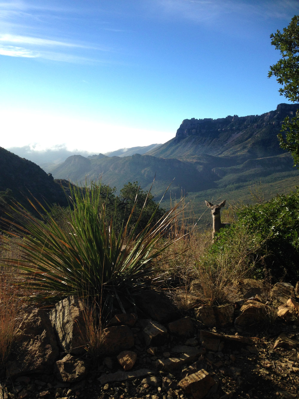 Taken in the Chisos Mountains of Big Bend National Park in Texas ^