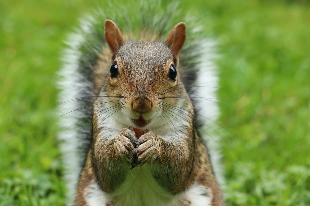 squirrel-2962847_1280.jpg
