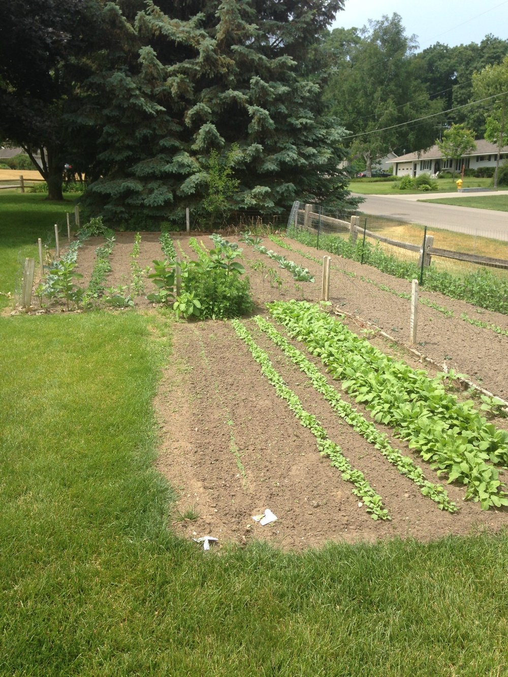 New garden , west side 2017