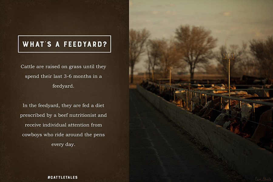 What's a Feedyard