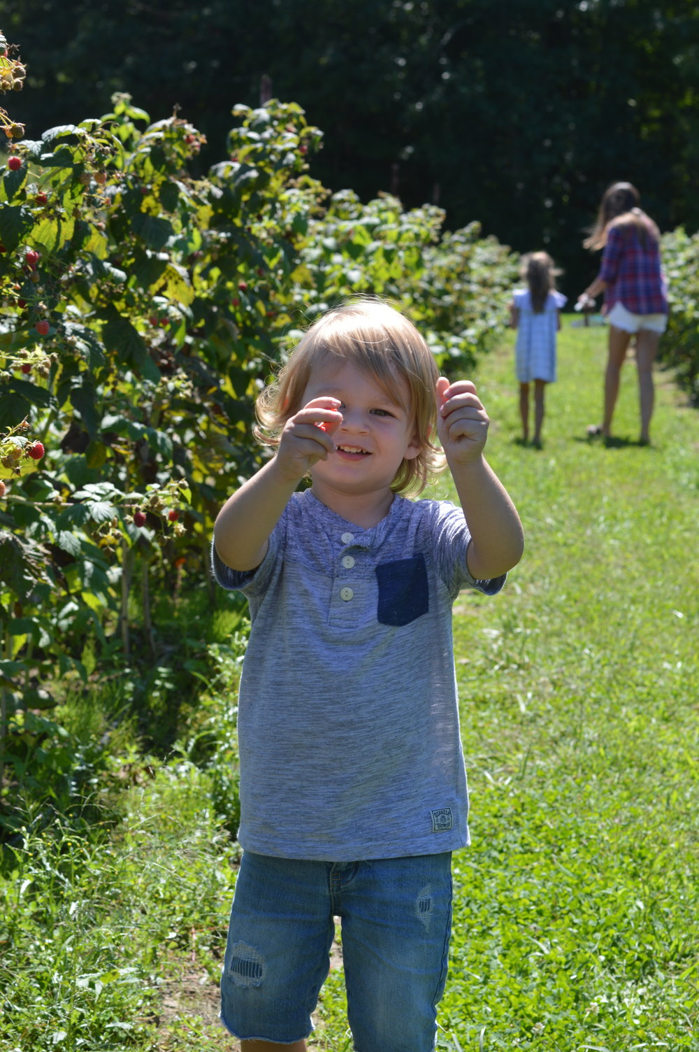 toddler berry picking