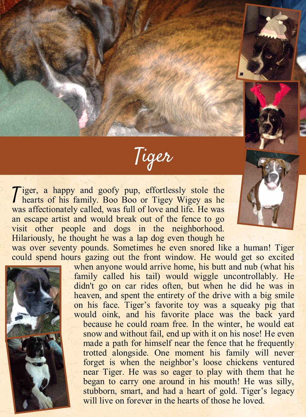 Tiger's Life Tail
