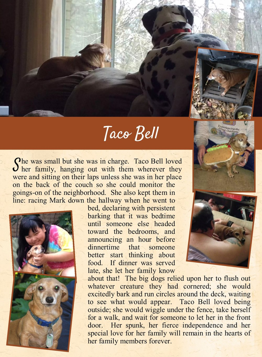 Taco Bell's Life Tail