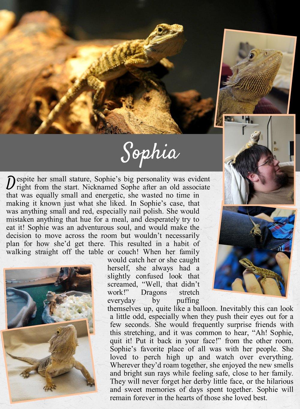 Sophia's Life Tail