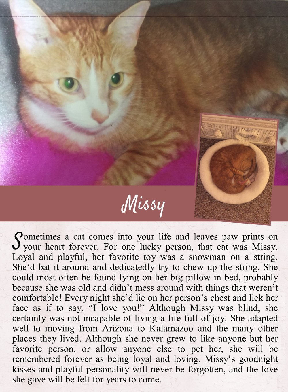 Missy.jpg