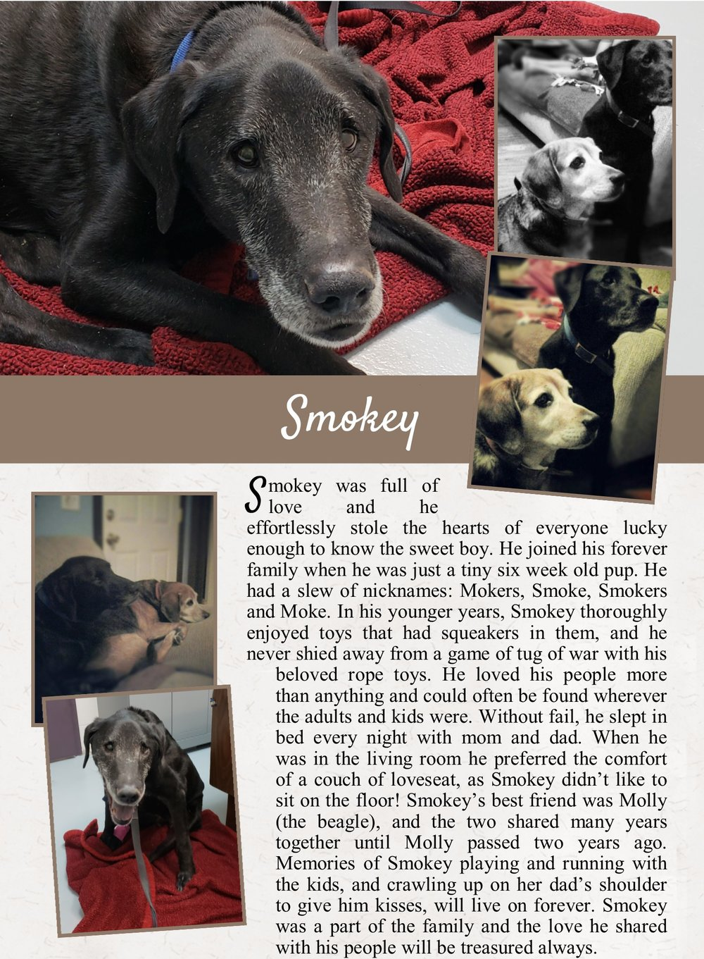 Smokey's Life Tail
