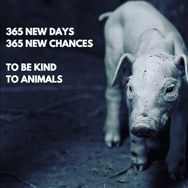 We hope everyone is having a great start to a new year! Remember: it's never too late to change. 😘 #govegan #vegan #vegansofig #vegansofinstagram #compassion #loveanimals #friendsnotfood #crueltyfree #happynewyear2017 #bethechange #torontoveganflea