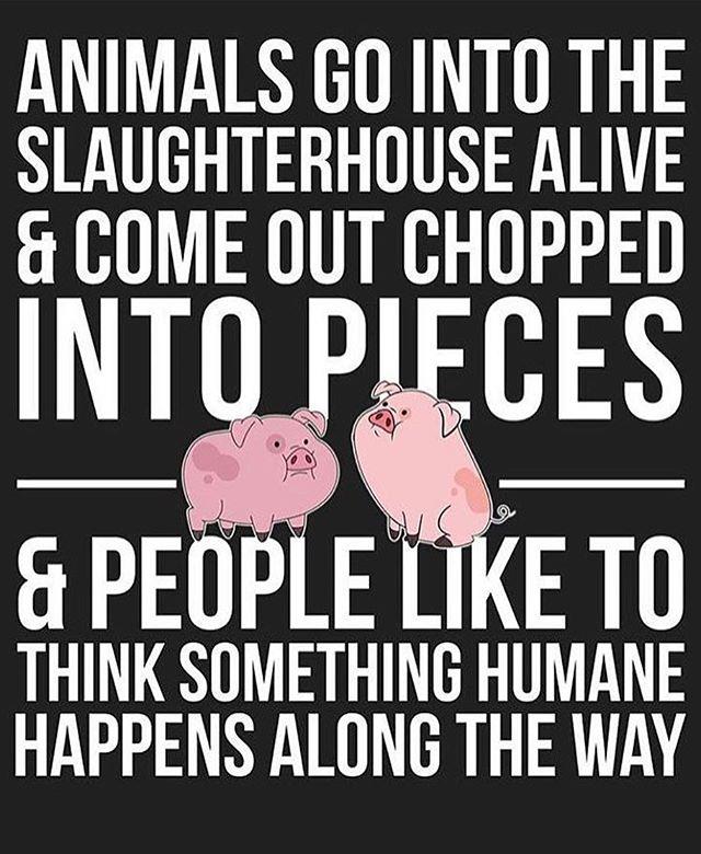 Seriously.  #meatisnothumane #humanemeatisvuppybullshit #vegan #govegan #vegansofig #veganofinstagram #crueltyfree #compassion #becompassionate #torontoveganflea