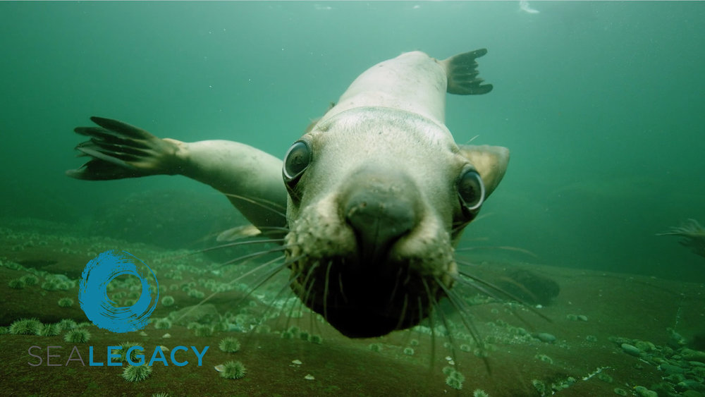 "SeaLegacy - ""The Salish Sea: A Legacy Moment"""