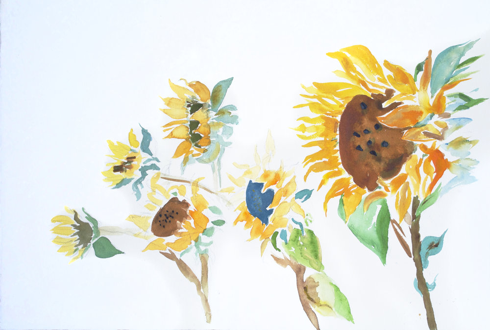 Sunflowers 1   Watercolor on Paper 15 x 22 1/4""