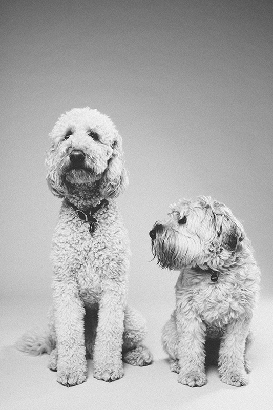 my sweet pups - Photo by Peter Larson