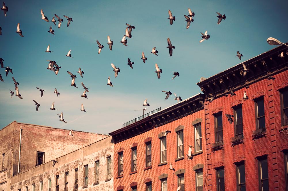birds over brooklyn