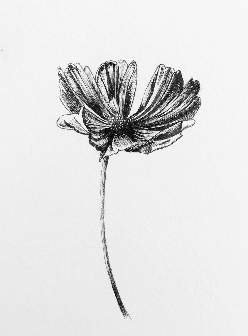 Day 20 - Flora's Flora.jpg